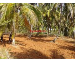 4 acre Agriculture Land - Turvekere - Tumkur