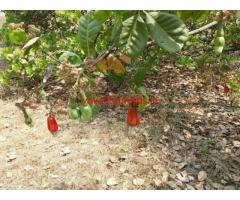 2 Acres Farm land with Farm house for sale near Badlapur - Thane