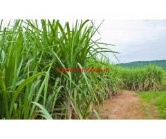 80 Guntha, Ranmala Kadus, Agriculture land for sale