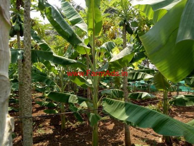 2 acres 31 gunta farm land for sale , 24 km from Mysore City Center