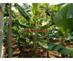 2 acres 31 gunta farm land for sale , 24 km from Mysore City Center