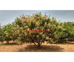 2 acres well maintained mango farm for sale at Uttangarai in krishnagiri