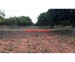 9 acre of Mango farm for sale near Chintamani