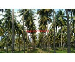 14 Acres coconut farm land for sale in near ayyampalayam, vathalakundu