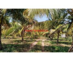 5 Acre coconut farm land for sale in near vadipati. Nilakkottai