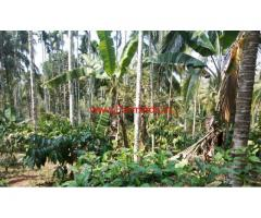 2 Acre coffee land for sale at kenichira, Wayanad