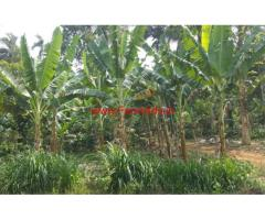 Beautiful 1 acre river touch farm land for sale in mananthavady