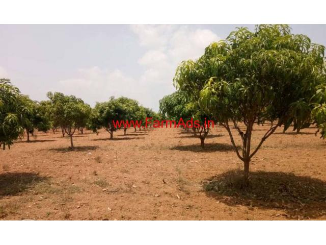 4 acres Mango Farm for sale at KV Palli Mandal - Chitoor