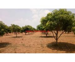 4 acres Mango Farm for sale at KV Palli Mandal - Chitoor