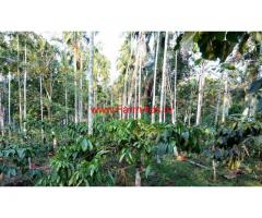 Two acre coffee and areca farm land for sale in wayanad near koleri.