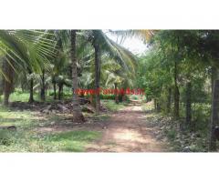 50 Cents Coconut Farm for sale at Alandurai, coimbatore
