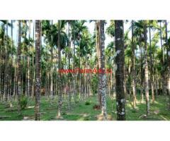 8 Acres Arecanut Farm for sale near Mangalore