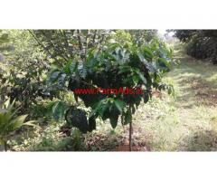 3.5 Acre Coffee Estate for sale at Chikmagalur, near Shirvase
