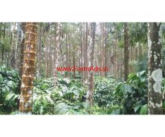 6 Acre Well Maintained Coffee Estate For Sale, 25Km From Kalasa-Balehonnur