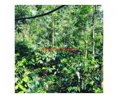9 acre coffee estate for sale in arehalli , Belur taluk