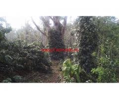 Well Maintaned 20 Acre Coffee Estate For Sale In Jayapura