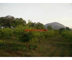 10 Acres Lemon and Mango Orchard for sale at Kolar