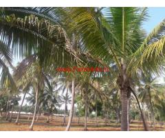 2 Acres Coconut Farm Land for sale, 4 Mins from Chennapatna bus stop