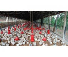 1.75 Acre farm land chicken Farm for sale in ernakulam mulanthuruthy