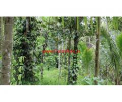 1 acre agriculture land for sale near Thalapuzha, 2 km to Kannur Airport rd