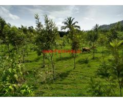 1.9 Acres Coconut farm land for sale in Doddaballapura