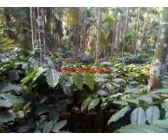 5 acre 20 gunta Robusta coffee estate for sale, 2KM from Kalasa