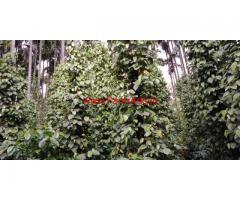 4.5 acre coffee estate for sale in Mudigere , Chikkamagluru