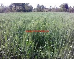 50 acre agriculture land for sale near Katol