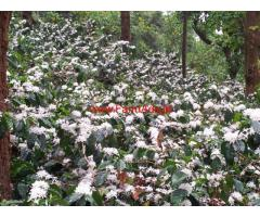 5 Acre Recorded Coffee Plantation For Sale in Chikmagalur - Kalasa