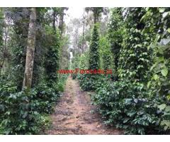 7 acre very well maintained plantation for sale in Mudigere