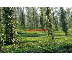 3 acre picturesque farm land for sale in wayanad. near banasura