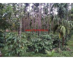 7 Acre Well Mainatained Robasta Coffee Estate For Sale In Mudigere Taluk