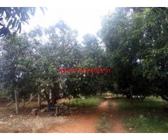 16 acres Mango farm land available for sale at chintamani.