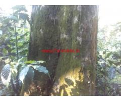 123 Acres Neglected Coffee Estate For Sale at Mudigere In Chikmagalur