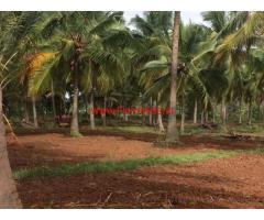 12.5 Acres Coconut Farm for sale at Hassan - Belur road.