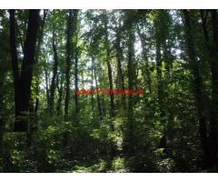 3.79 acres wet land for sale near Udupi