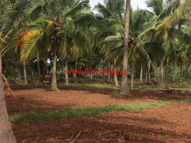 2 acres Coconut Farm for sale near Belur, 2 KMS from City