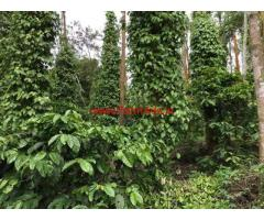 23 Acres Coffee Estate for sale in Chikkamagaluru, near Shirvase