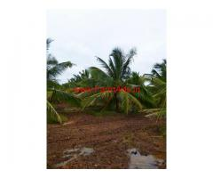 20 Acres - 5 Years old, good yielding DJ Coconut farm for sale.