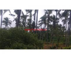 8 acres Coconut plantation for sale near Covai, Nachipalayam