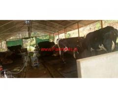 10 acres Farm land with Dairy farm for sale at Mananthavady