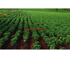 3.5 acre Agriculture land for sale in chikkamagaluru