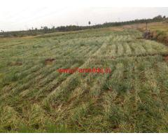 Low Budget 100 acres agriculture land sale near Palani