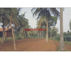 38 Gunta Coconut Farm for sale at Nittur, Chennapatna.