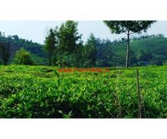 125 Cents Tea Estate for sale, 6.5 KMS from Ooty
