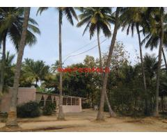 1.30 Acres Coconut Farmland for sale at Periyanaickenpalayam