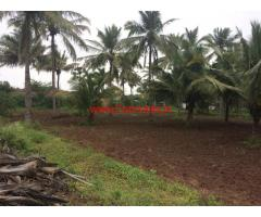 Well maintained high yielding 1.35 Acres coconut farmland sale Vadachittur