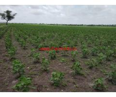 3 Acre Agriculture Land For Sale 14 KMs from Amangal