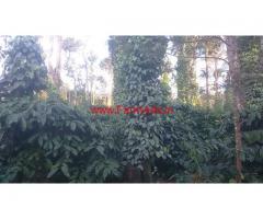 10 acres Coffee estate for sale on Mullayanagiri Road