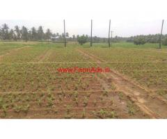 4.5 acres agriculture land for sale near Thunkavi